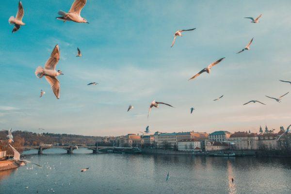 Training course - Solidarity Projects MEET-UP 2020 - Czech Republic - Erasmus Plus - Abroadship.org